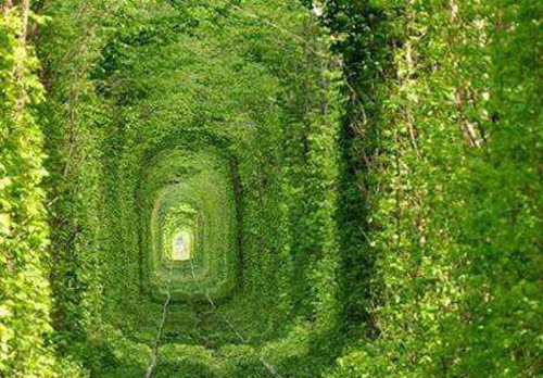 这条大自然的爱情隧道,你想和谁一起走?