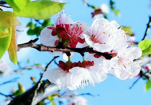 你见过春日里的唐汪吗?这篇文章告诉你唐汪里有什么?